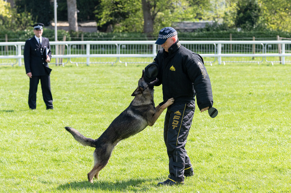 Action from the 58th National Police Dog Championships 2018 - 22